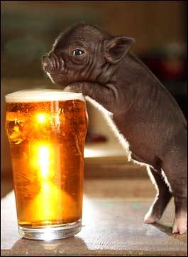 pig_beer